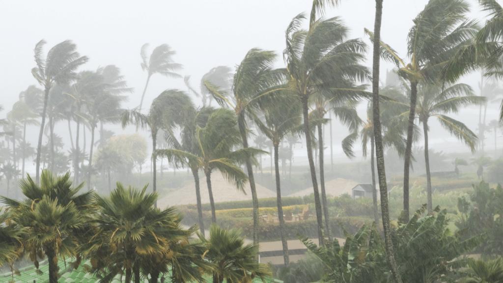 carolina hurricane wind rain trees